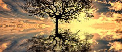fa és felhők, hinta faágak